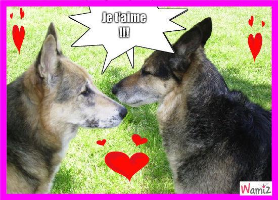 dog dog love love, lolcats réalisé sur Wamiz