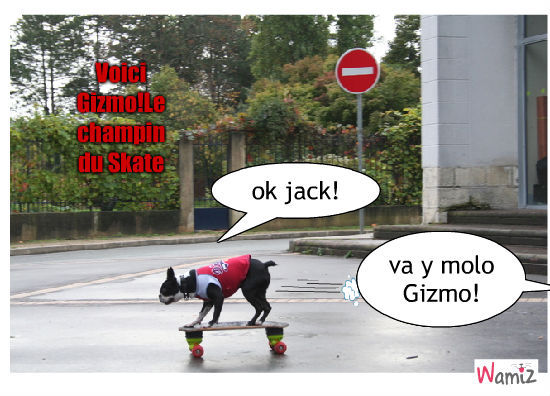 skate, lolcats réalisé sur Wamiz