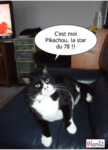Pikachou la star du 78, lolcats réalisé sur Wamiz