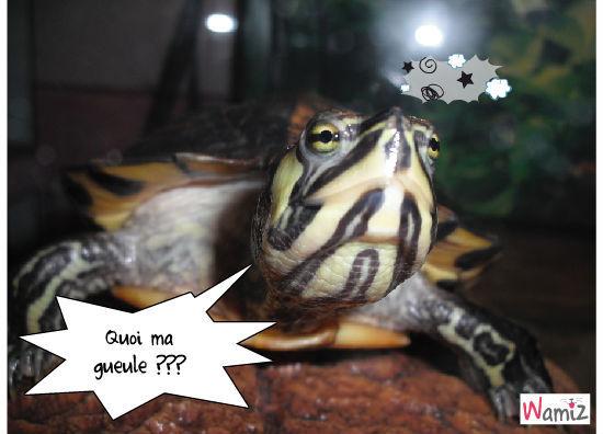 quoi ma gueule de tortue , lolcats réalisé sur Wamiz