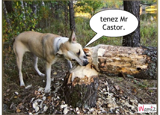 arbre, lolcats réalisé sur Wamiz