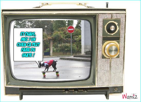 Le chien skateur, lolcats réalisé sur Wamiz