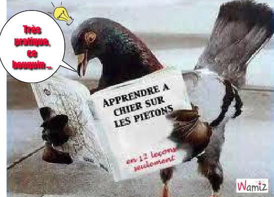 Le pigeon chieur, lolcats réalisé sur Wamiz