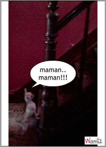 ulysse devant les escaliers, lolcats réalisé sur Wamiz