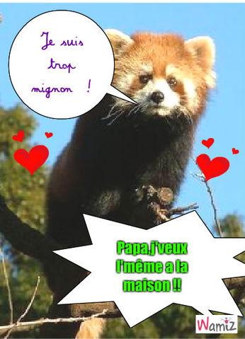 Le panda roux, lolcats réalisé sur Wamiz