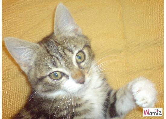 Mon chat Cailloux, lolcats réalisé sur Wamiz