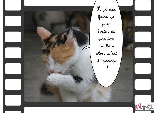 Le chat propre, lolcats réalisé sur Wamiz