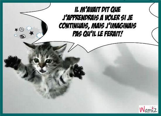Le chat qui vole, lolcats réalisé sur Wamiz