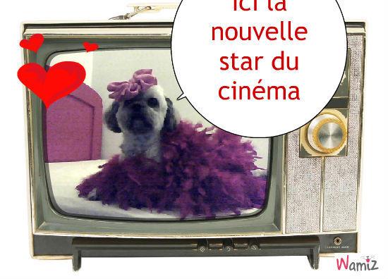 le chien qui se prend pour une star de la télé, lolcats réalisé sur Wamiz