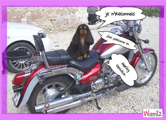 Biker attitioude, lolcats réalisé sur Wamiz