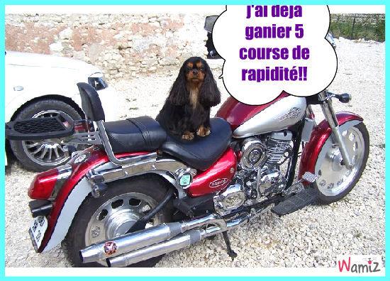 la motola moto, lolcats réalisé sur Wamiz