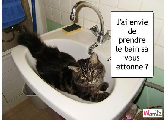 Le chat qui veut prendre le bain, lolcats réalisé sur Wamiz