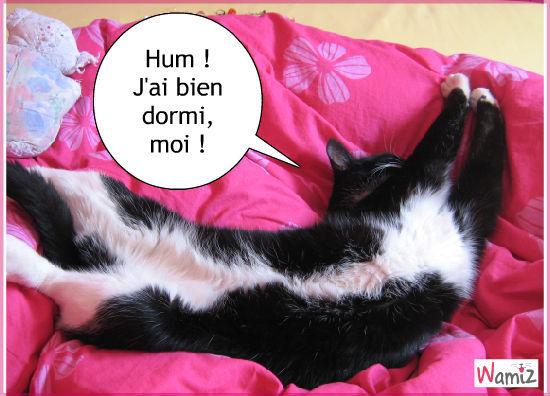 Hum ! J'ai bien dormi, moi !, lolcats réalisé sur Wamiz