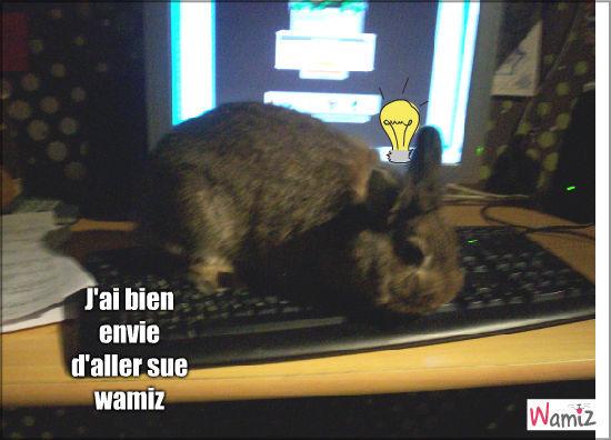 Mon lapin sur le Pc, lolcats réalisé sur Wamiz