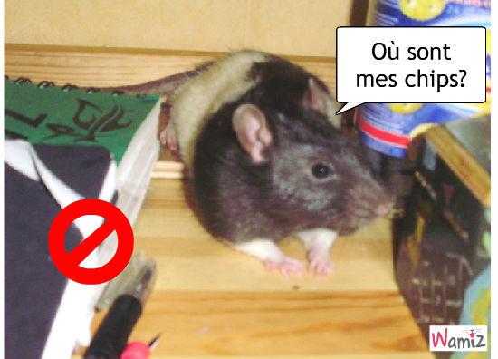 la souris fole, lolcats réalisé sur Wamiz