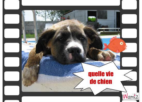 vie de chien, lolcats réalisé sur Wamiz