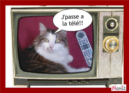 Télé, lolcats réalisé sur Wamiz