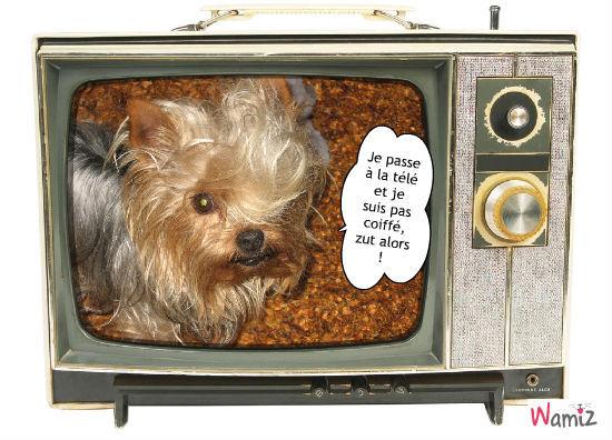 Je passe à la télé, lolcats réalisé sur Wamiz