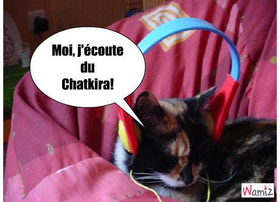 chat mélomane, lolcats réalisé sur Wamiz