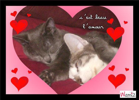 c'est beau l'amour ..., lolcats réalisé sur Wamiz