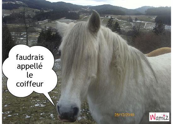 le cheval au cheveux long, lolcats réalisé sur Wamiz
