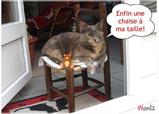 Petite chaise, gros chat, lolcats réalisé sur Wamiz