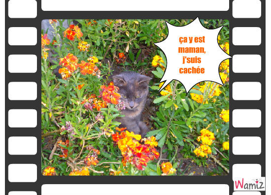 cache-cache-chat, lolcats réalisé sur Wamiz