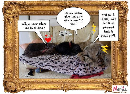 la sieste sur le canapé, lolcats réalisé sur Wamiz