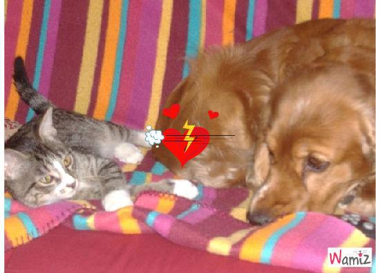 chiens et chats, lolcats réalisé sur Wamiz
