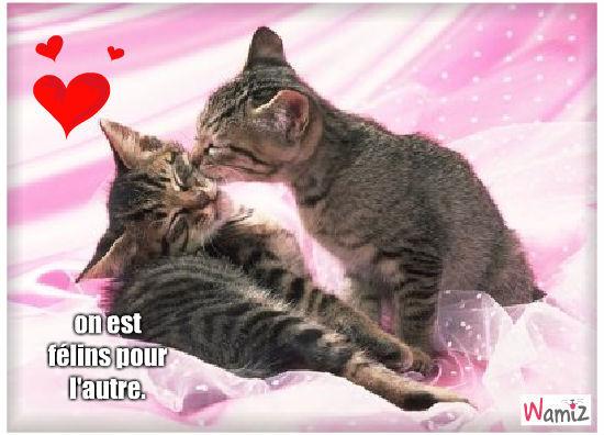 chat amoureux, lolcats réalisé sur Wamiz
