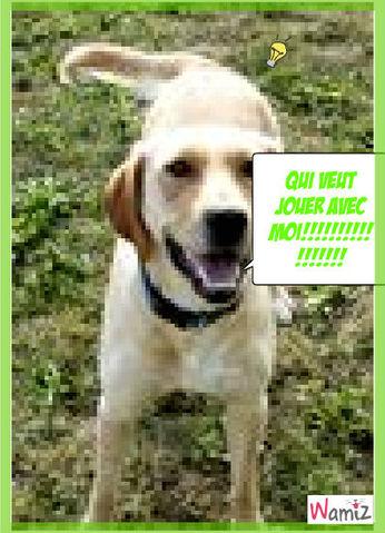 le plus bo chien, lolcats réalisé sur Wamiz