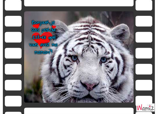 tigre blanc, lolcats réalisé sur Wamiz