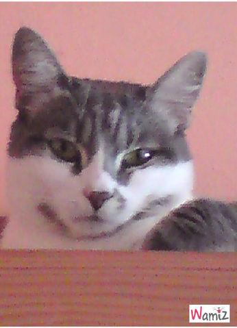kitty, lolcats réalisé sur Wamiz