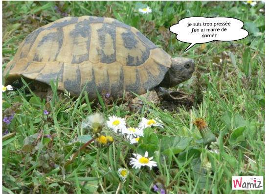 tortue, lolcats réalisé sur Wamiz