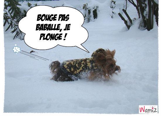 Biki dans la neige, lolcats réalisé sur Wamiz