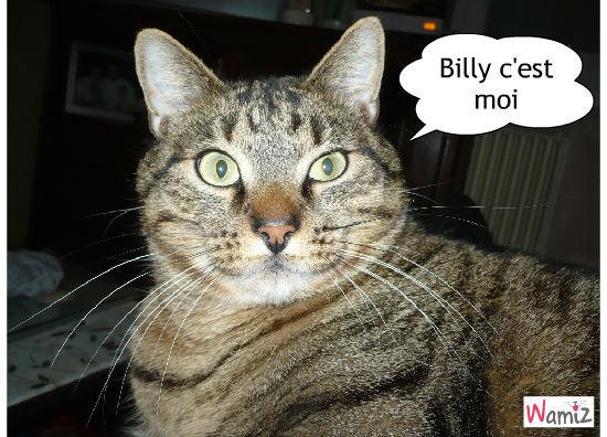 Billy, lolcats réalisé sur Wamiz