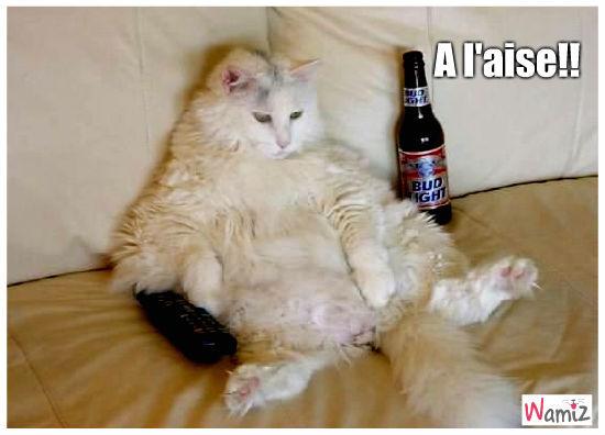 chat alcolo, lolcats réalisé sur Wamiz
