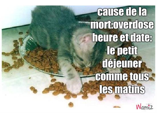 chat mange trop, lolcats réalisé sur Wamiz