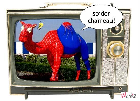spider chameau, lolcats réalisé sur Wamiz