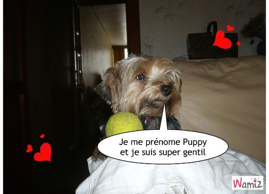 Puppy Chéri, lolcats réalisé sur Wamiz