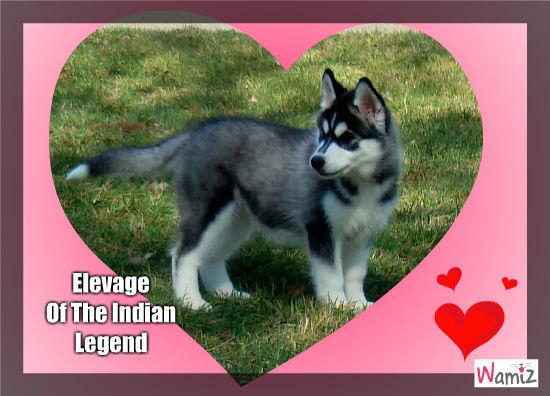 Elevage Of The Indian Legend, lolcats réalisé sur Wamiz