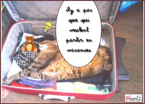 le chat dans la valises, lolcats réalisé sur Wamiz