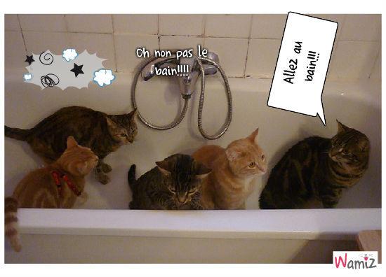 Le bain est arrivé, lolcats réalisé sur Wamiz