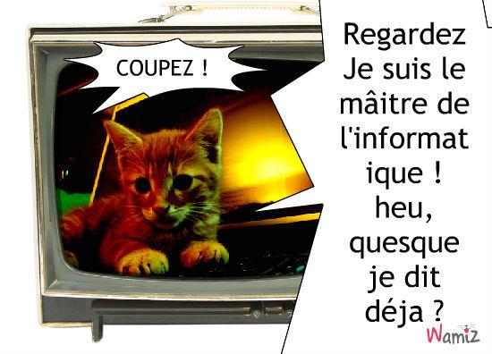 Chat de la télé !, lolcats réalisé sur Wamiz