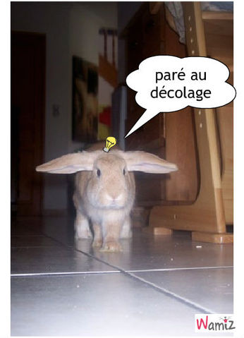 décole lapin, lolcats réalisé sur Wamiz