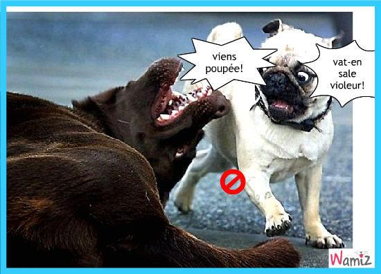 chien violeur, lolcats réalisé sur Wamiz