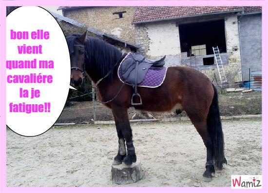le cheval, lolcats réalisé sur Wamiz