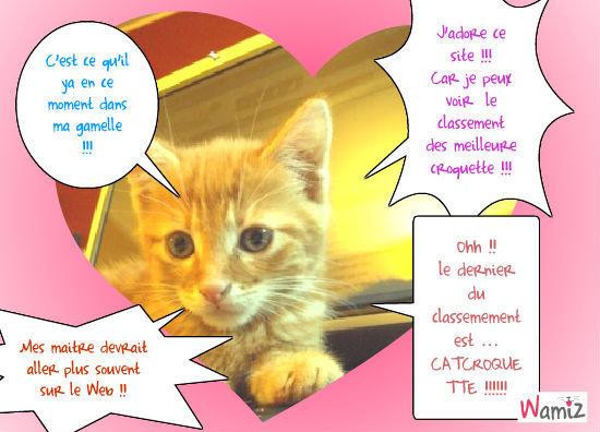 le chat blogueure, lolcats réalisé sur Wamiz