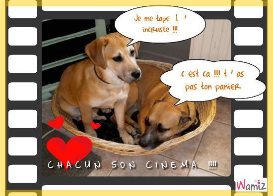 la cohabitation !!!!!!, lolcats réalisé sur Wamiz