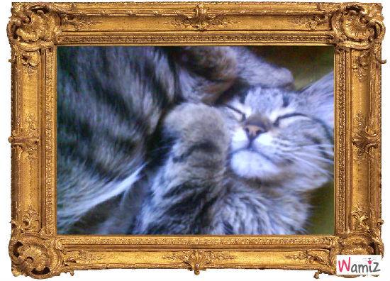 Dur la vie de chat !, lolcats réalisé sur Wamiz